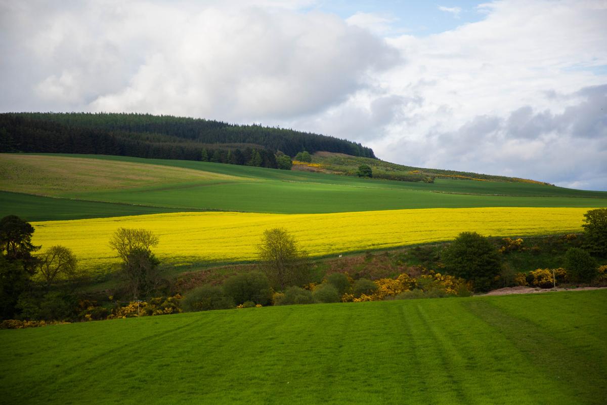 landscape_yellow-jm